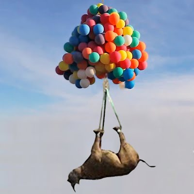 Rhino Flying With Help of Helium Cluster Balloons (Volatility Research) 1000w