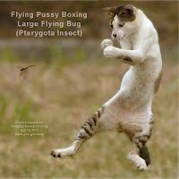 Flying Pussy Boxing Large Flying Bug — Pterygota Insect (Volatility Research) 1000w