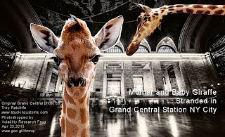 Mother and Baby Giraffe Stranded in Grand Central Station NY City (Volatility Research) 1000w