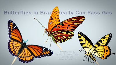 See How Butterflies In Brazil Really Can Pass Gas