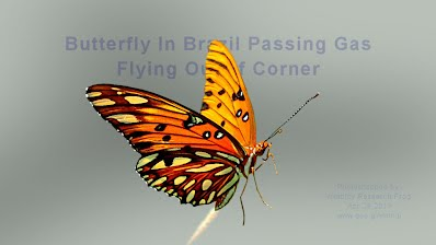 Butterfly In Brazil Passing Gas Flying Out of Corner Photo #5 (Volatility Research) 1000w