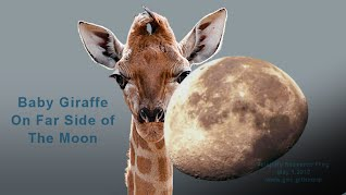 Baby Giraffe On Far Side of The Moon (Volatility Research) 1000w