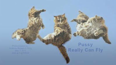 Pussy Really Can Fly (Volatility Research) 1000w