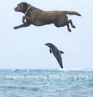 Dolphin Jumping With Flying Dog (Volatility Research) 1000w