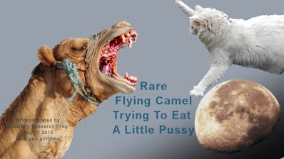 Rare Flying Camel Trying To Eat a Little Pussy (Volatility Research) 1000w