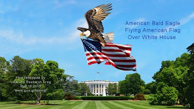 American Bald Eagle Flying American Flag Over White House (Volatility Research) 1000w