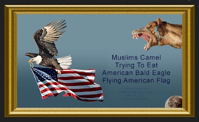 Muslims Flying Camel Trying To Eat American Bald Eagle Flying American Flag (Volatility Research) 2116w