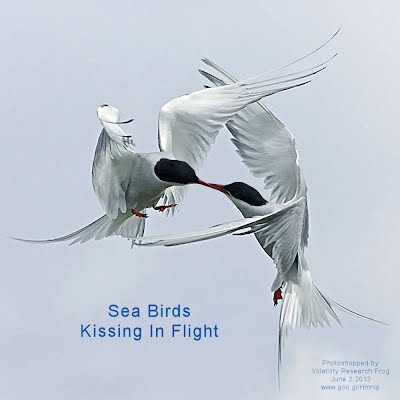 Sea Birds Kissing In Flight (Volatility Research) 1000x1000