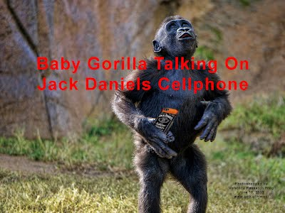 Baby Gorilla Talking On Jack Daniels Cellphone (Volatility Research) 1000h