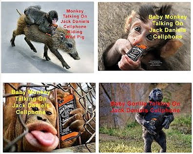 Three Monkeys and Baby Gorilla Talking On Jack Daniels Cellphones (Volatility Research) 1000h