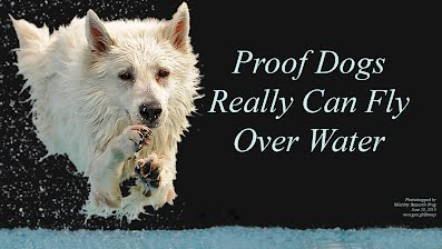 Proof Dogs Really Can Fly Over Water (Volatility Research) 1000h